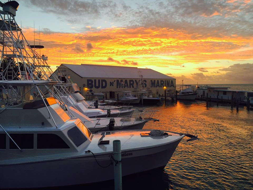 Bud n 39 mary 39 s florida keys fishing marina added to our for Bud and mary s fishing report